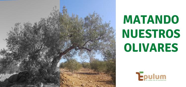 Matando nuestros olivares